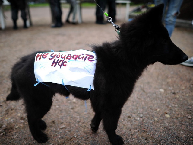 Статья 245 УК РФ: жестокое обращение с животными. Ответственность за административные правонарушения по нормам КоАП РФ