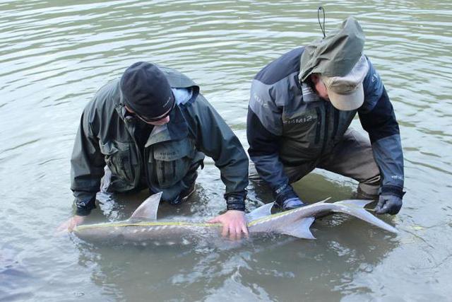Незаконная охота и браконьерство: понятие и ответственность по нормам 258 статьи Уголовного кодекса РФ