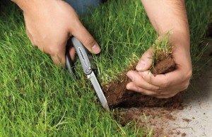 Статья 7.1 КОАП РФ: самовольное занятие земельного участка. Определение, последствия и ответственность