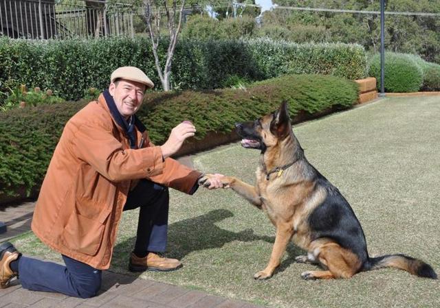 Закон о содержании собак в многоквартирном и частном домах: правила выгула животных, ответственность хозяина
