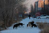 Кража животных: какая предусмотренная ответственность за хищение скота, собак, лошадей, коров и куда обращаться с заявлением